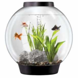 Office Fish Tank