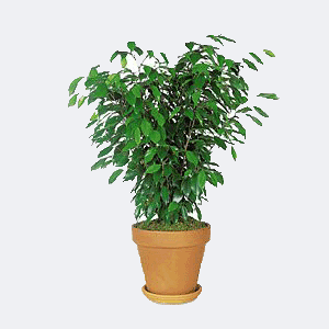 Office Move Plant